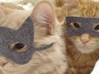 Dress Up Your Pet: Adorable Pictures Of Pets In Accessories