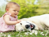 Cute Baby And Animal Compilation