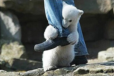 polar-bear-attack