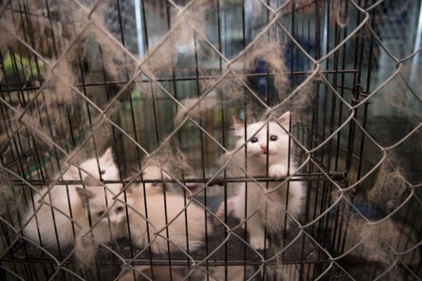 Puppy Mill Kitten Mill
